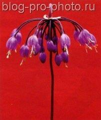 фотосессия цветка