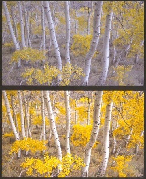 обработка пейзажного снимка
