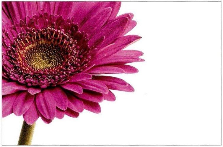Фотографируем отдельный цветок