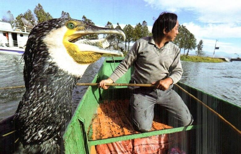 Рыбалка с бакланами.